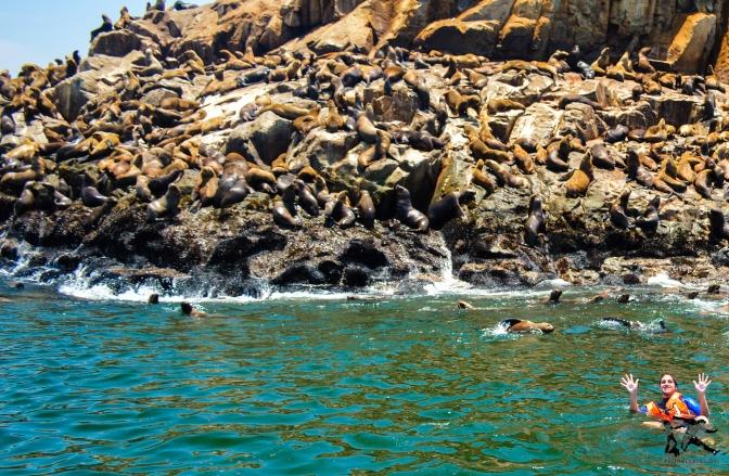 Nadando com Lobos Marinhos no Peru