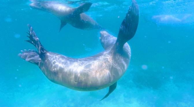 28 dicas para você ir pra Galápagos de forma mais econômica.